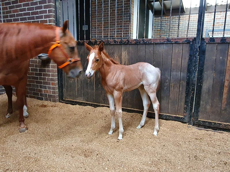 2019 Filly VQHR Twice The Style